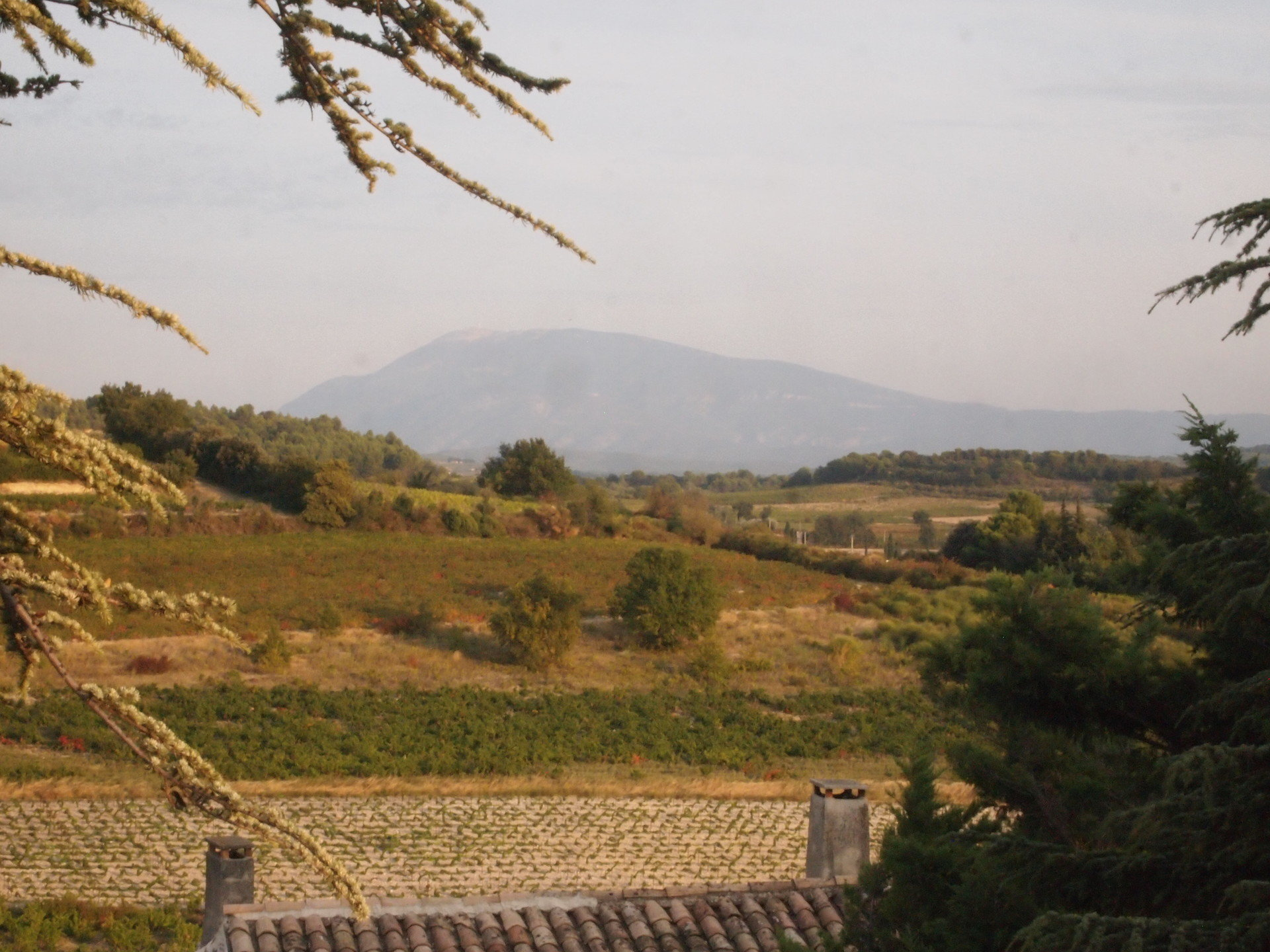 Domaine-de-la-Massane