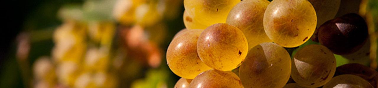 Zoete-wijn